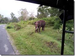 Docile Elephant